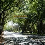 ClaremontTrees